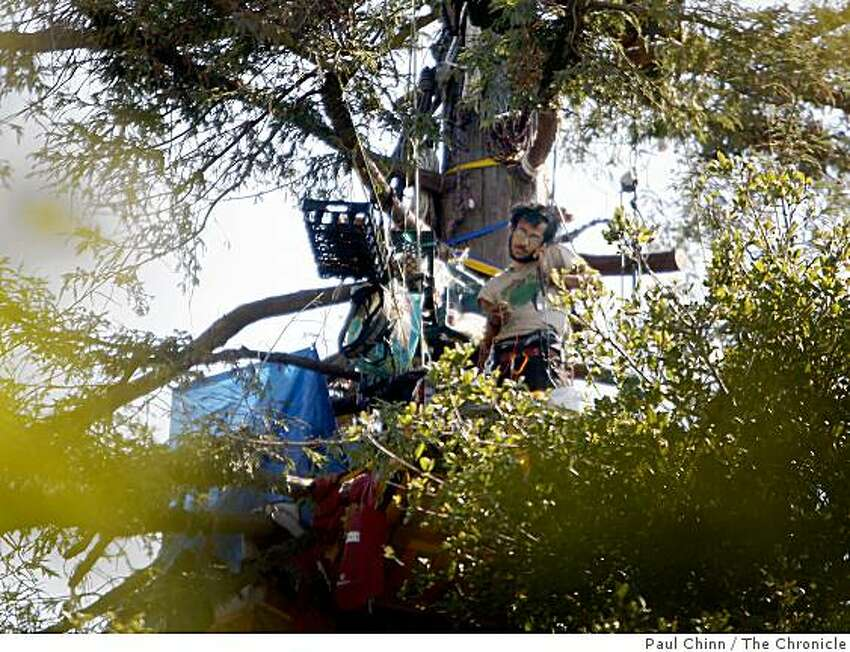 A protester perched in a tree communicates with his ground crew while trees are cut down in an grove next to Cal's Memorial Stadium in Berkeley, Calif., on Saturday, Sept. 6, 2008.