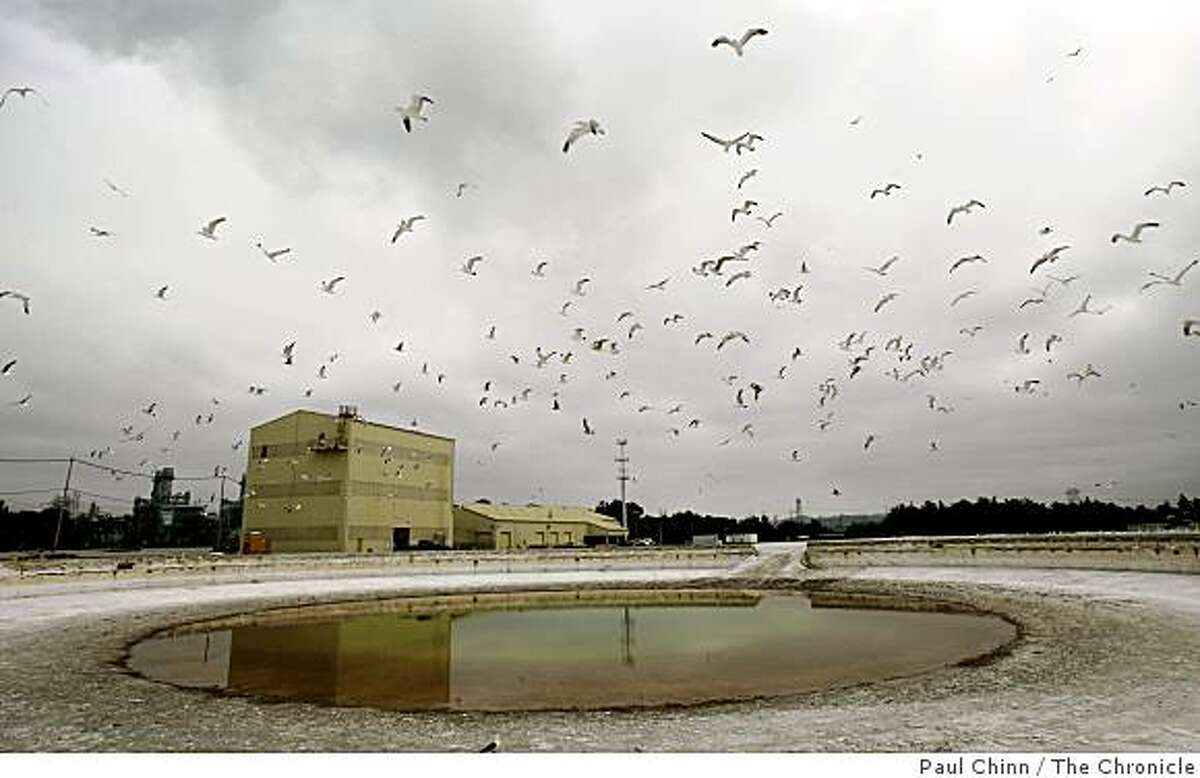 Seagulls control the airspace above one of the seven three-million gallon thickener tanks that will be used by the Moss Landing Cement Company in Moss Landing, Calif., on Tuesday, July 15, 2008.Photo by Paul Chinn / The Chronicle