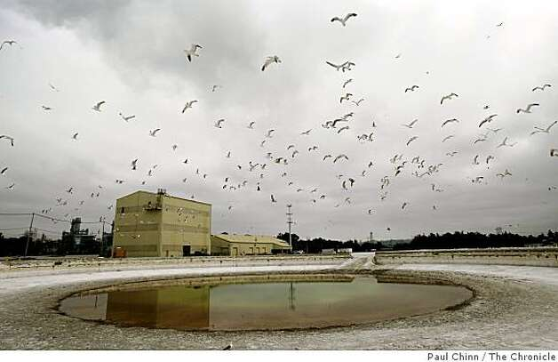 Seagulls control the airspace above one of the seven three-million gallon thickener tanks that will be used by the Moss Landing Cement Company in Moss Landing, Calif., on Tuesday, July 15, 2008.Photo by Paul Chinn / The Chronicle Photo: Paul Chinn, The Chronicle