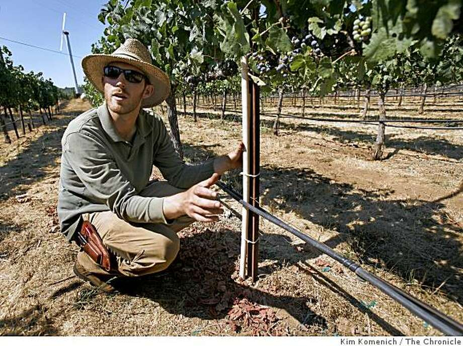 "Stagecoach Vineyards near Napa, Calif., is testing new inexpensive soil sensors that use telemetry to provide information about soil water in a more precise way than existing technology. Stagecoach viticulturist Jason Cole showed the new  Crossbow ""Eko"" sensors the vineyard is testing on Aug. 15, 2008 Photo: Kim Komenich, The Chronicle"