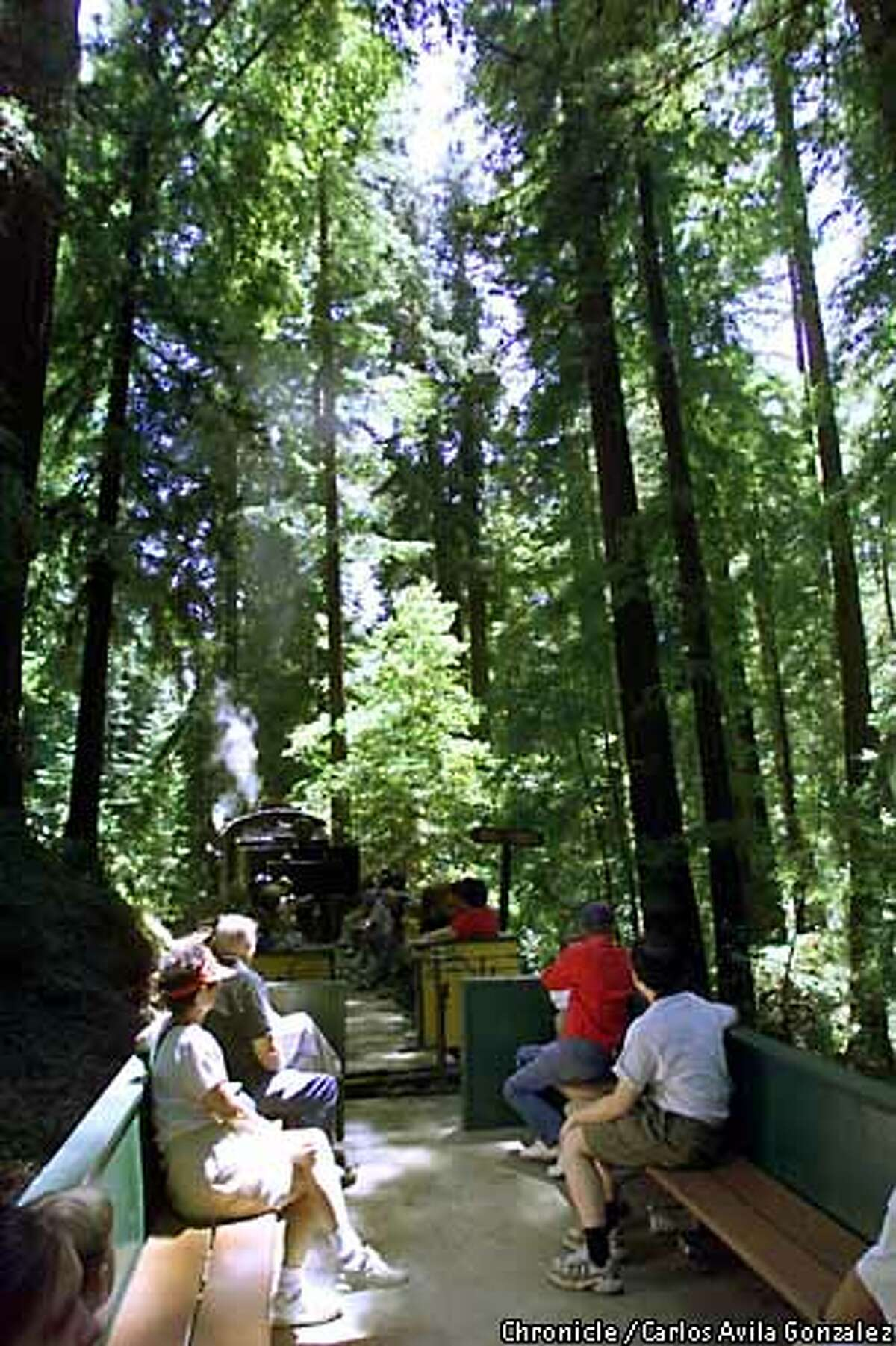 ROARING CAMP AND BIG TREES RAILROAD / Visitors to Roaring Camp in Felton, Ca., get a splendid view of the redwood forest of the Santa Cruz Mountains from Engine # 7 on Thursday, July 15, 1999. (CARLOS AVILA GONZALEZ/SAN FRANCISCO CHRONICLE) ALSO RAN: 08/13/1999 (CF,CC4) 09/03/1999 (PF,PN6)