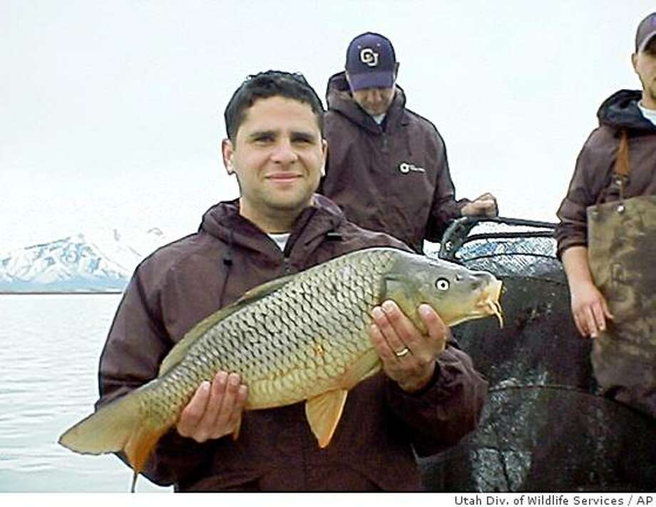 In this photo released by the Utah Division of Wildlife Services on Aug. 13, 2008, Josh Rasmussen of the Utah Division of Wildlife Services holds a carp caught in Utah Lake in 2005. Carp were first put into the 151-square-mile lake in the late 1800s as a food source to replace dwindling native fish. Now the state wants to get rid of them. (AP Photo/Utah Div. of Wildlife Services, HO)  ** NO SALES ** Photo: Utah Div. Of Wildlife Services, AP