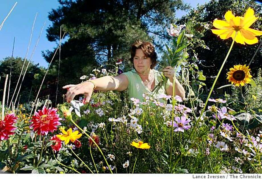 Amelia Barad Humphries owns and operates Sunhouse Flowers, a Wine Country floral arranger. What makes Sunhouse different from other florist is most of the flowers come from her own property. She and her family live in St. Helena were everything grows.Photographed in San Francisco Thursday July17, 2008. Photo by Lance Iversen / The Chronicle Photo: Lance Iversen, The Chronicle