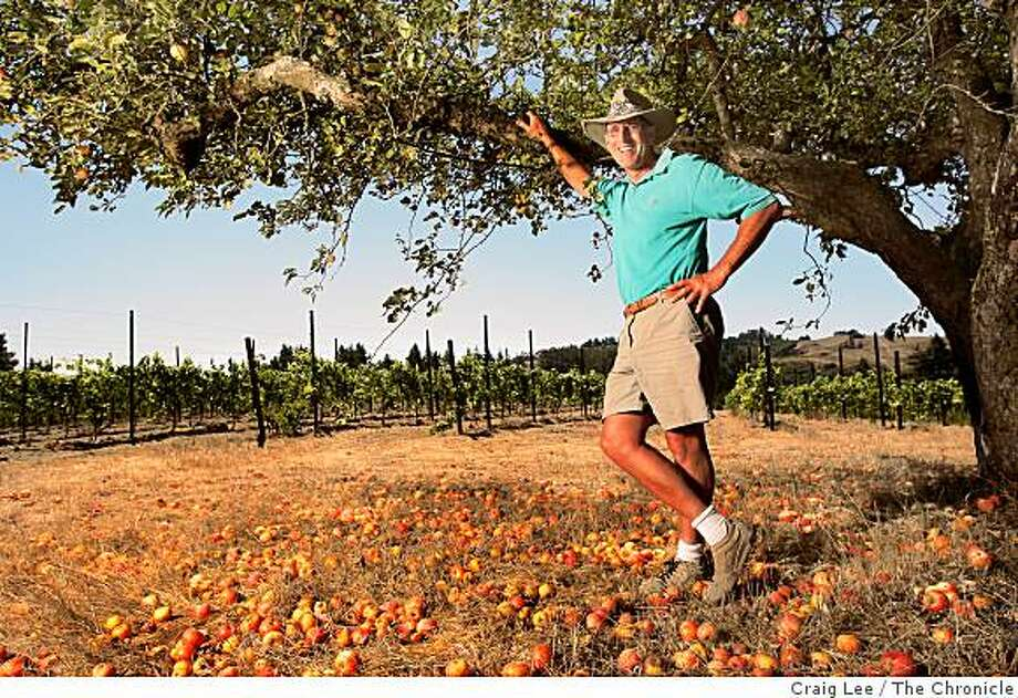 Ted Klopp on his Pinot Noir vineyard behind him, that once was an apple orchard, in Sebastopol, Calif., on August 25, 2008. Ted Klopp is standing next to one the few apple trees he kept which is a Gravenstein apple tree. Photo: Craig Lee, The Chronicle