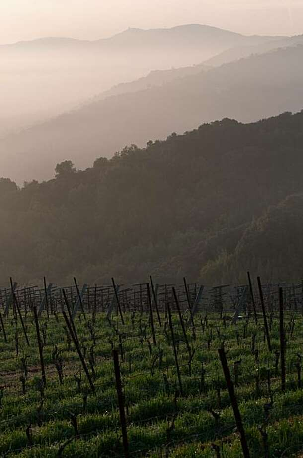 The sun rises over over a light fog and the dormant grape vines of Mount Eden Vineyards in the Santa Cruz Mountains on Wednesday, February 17, 2010. Photo: Chad Ziemendorf, Special To The Chronicle