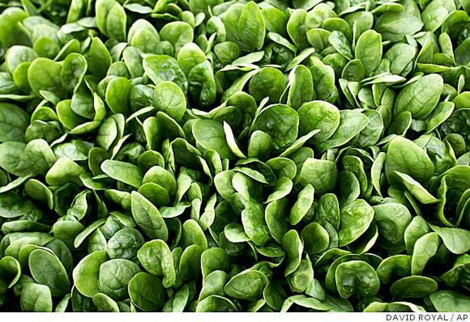 Untainted spinach grows in an Ocean Mist Farms field near Castroville, Calif., Monday, Sept. 18, 2006. Photo: DAVID ROYAL, AP