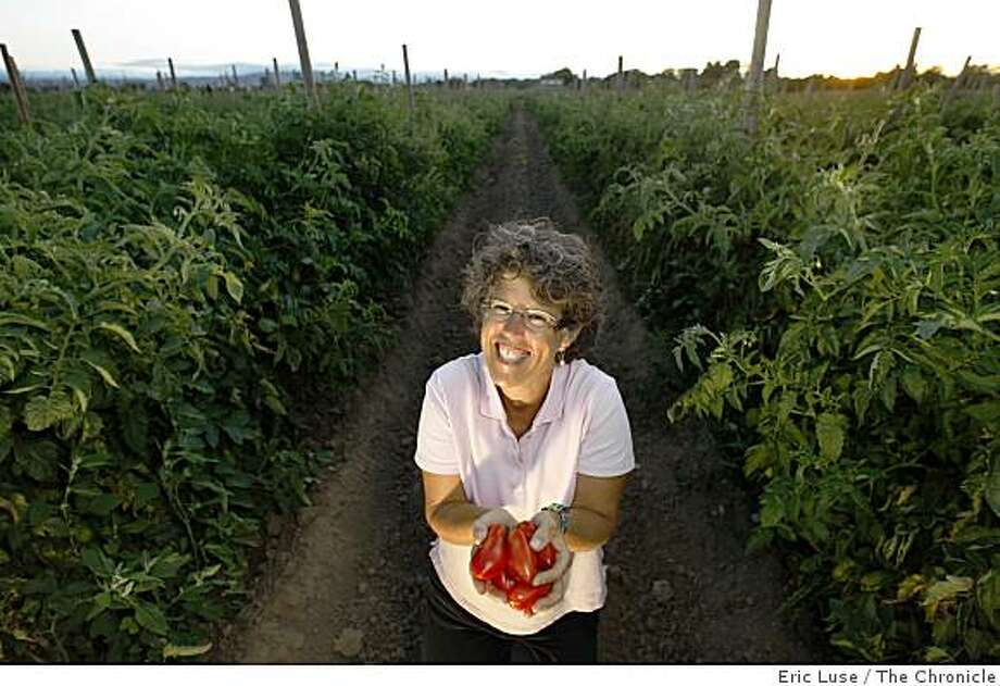 Ellen Gaucher uses San Marzano tomatoes from Mariquita Farms field ripened  by farmer Andy Griffin for her canning photographed on Monday, August 18, 2008. Photo: Eric Luse, The Chronicle