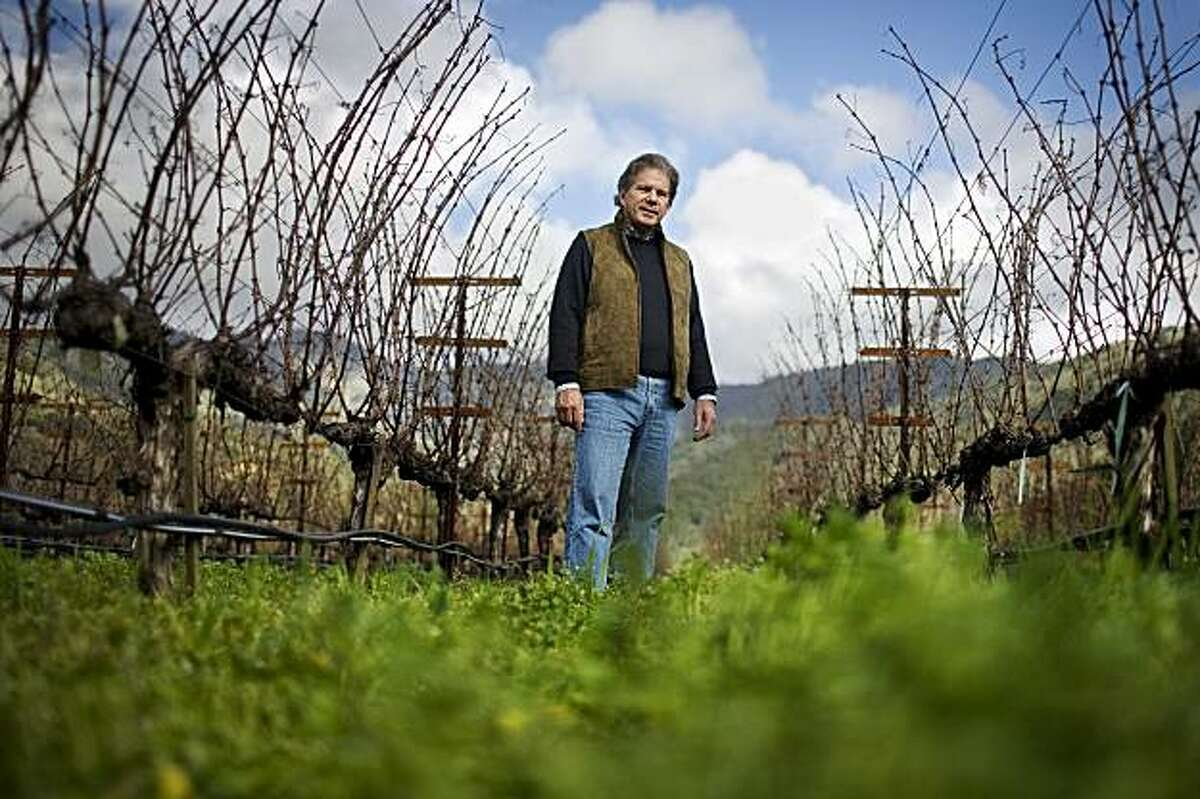 Vintner Bart Araujo walks through his Eisele vineyard, which incorporates certified biodynamic techniques, such as using a ground cover custom mix of vetch, magness and miranda peas, trios triticale, cayuse oats, mustard caliente, and some oil seed radish, maintains water retention in its rocky soil, in Calistoga, Ca, on Friday, Feb. 5, 2010.