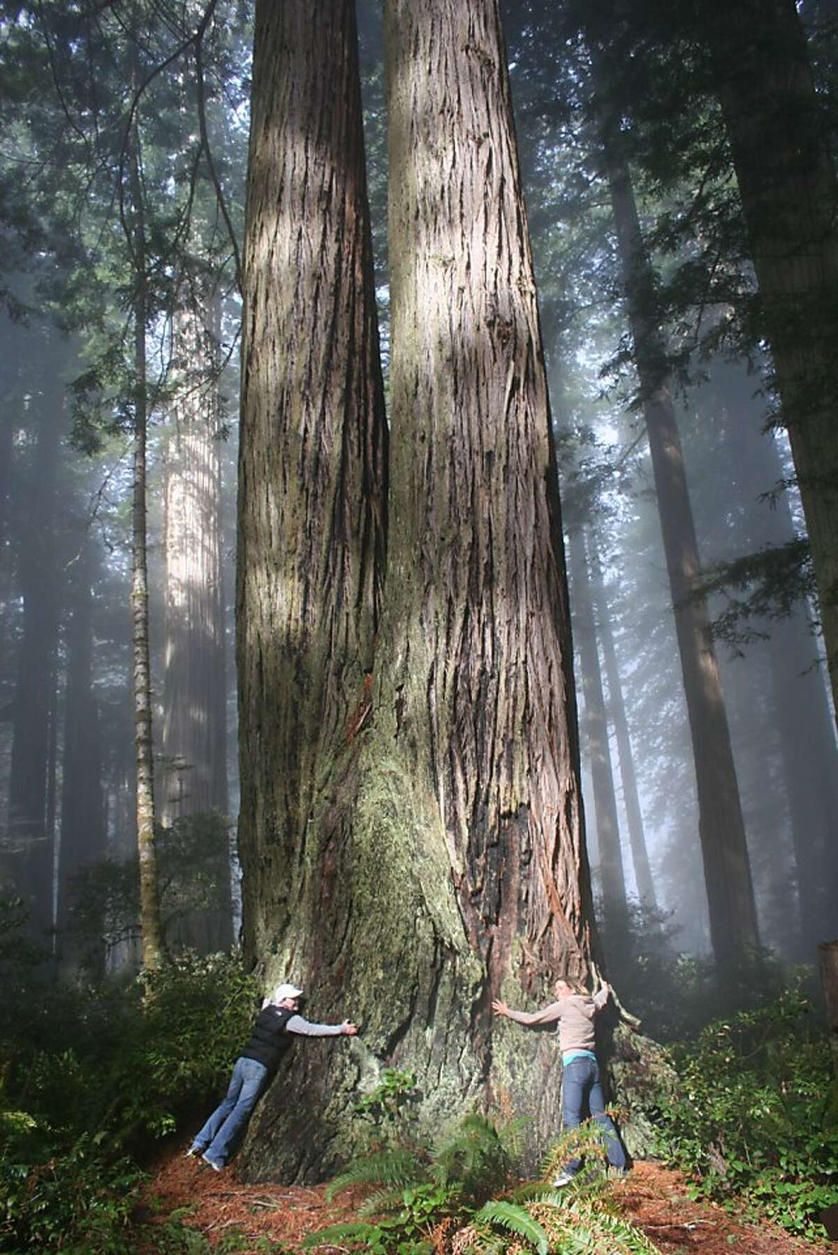 Young tree-huggers in Prairie Creek Redwood State Park in northern Humboldt County.