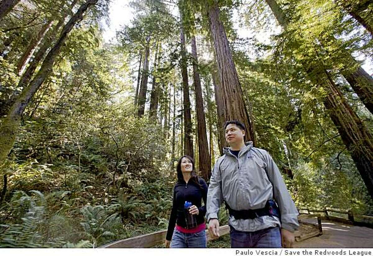 From the ground, looking up, it's almost impossible to grasp how tall coastal redwoods are.