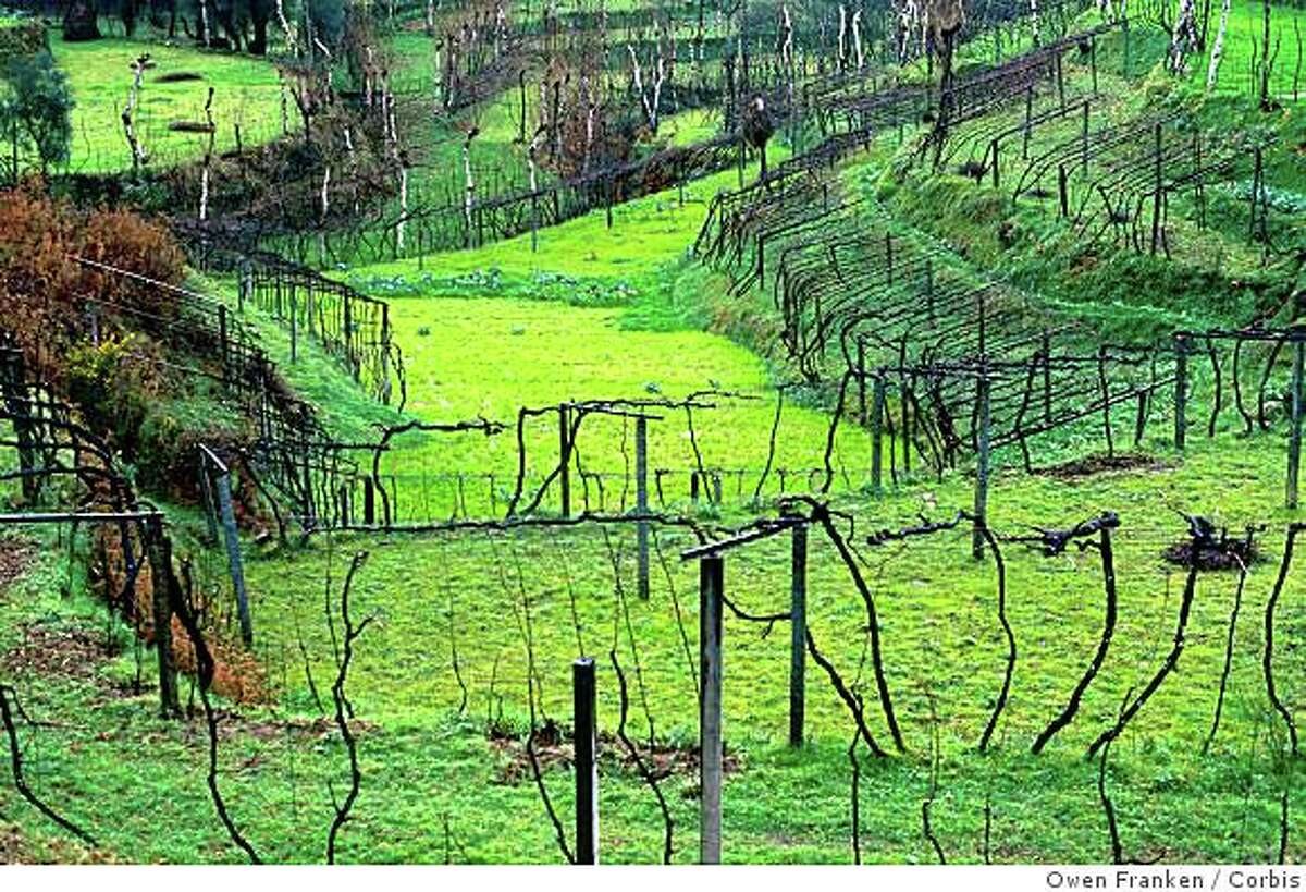 January 1998, Northern Portugal --- Vineyard in the Douro River Valley --- Image by � Owen Franken/CORBIS