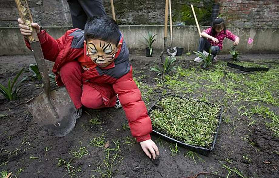 Derek Wong, 9, helps seed new plants in a garden at Chinatown's Ping Yuen Housing Project in San Francisco, Calif. on Friday, Feb. 12, 2010.  Several classes from neighboring Jean Parker Elementary School volunteered with San Francisco's Department of Public Works, planting and cleaning in preparation for Sunday's coming Chinese New Year. Photo: Adam Lau, The Chronicle