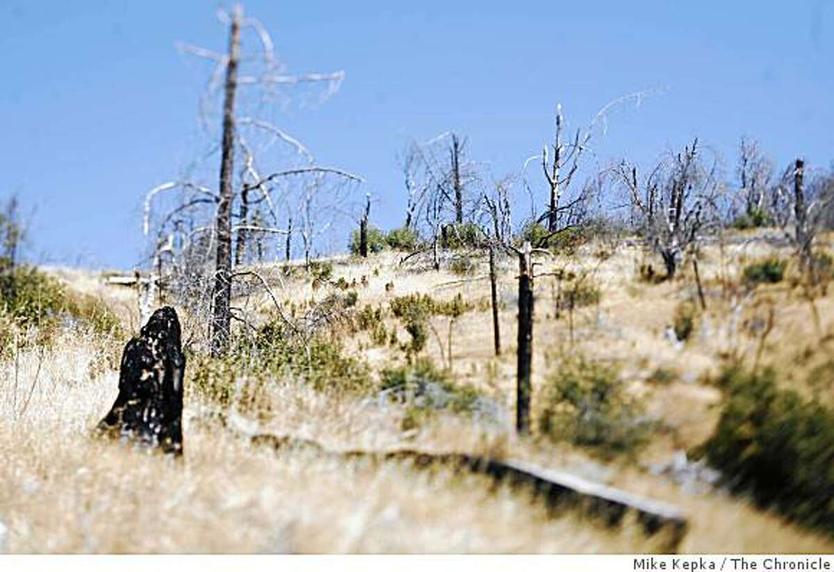 On Monday, August 4, 2008 in Jones Valley, Calif. a group of charred, leafless trees behind Matt Rupp's Jones Valley property are a reminder of a devastating fire that destroy many homes in 2004.