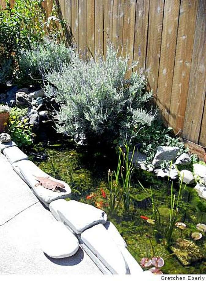 backyard pond side view Photo: Gretchen Eberly