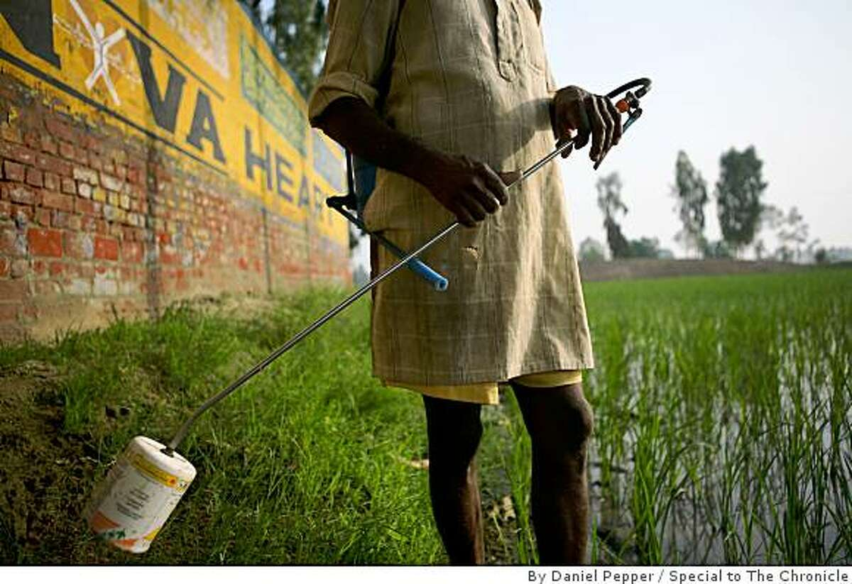 A farmer stands along the side of a rice patty field in the Punjab village of Bathinda, spraying insecticides without hand, foot or face protection.