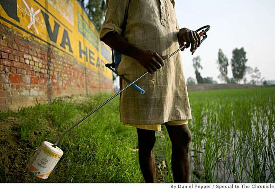 A farmer stands along the side of a rice patty field in the Punjab village of Bathinda, spraying insecticides without hand, foot or face protection. Photo: By Daniel Pepper, Special To The Chronicle