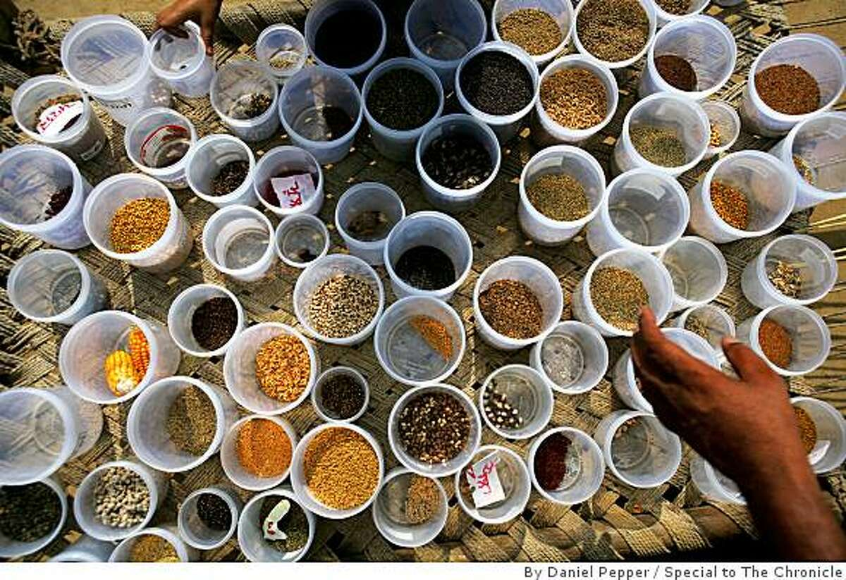 Seeds that farmers use for oganic farming in the village of Jajjal in Punjab state. The seeds are distributed for free, so long as participating farmer pledge to return an equal quantity of seed back to the bank at the end of the planting season. .