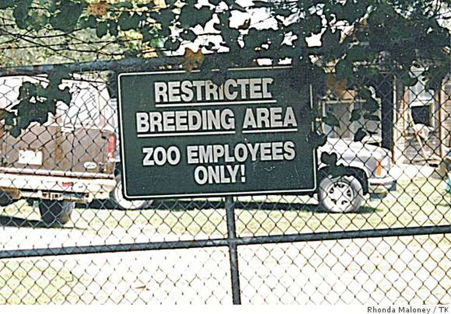 Coming soon! The first zoo employee born in captivity. Natural Bridge, Virginia. Photo: Rhonda Maloney, TK