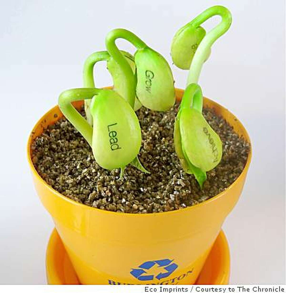 These bean seedlings with corporate logos are among the