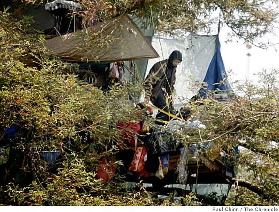 Protesters continue to occupy a grove of trees next to Memorial Stadium at UC Berkeley on Thursday, July 24, 2008. The Berkeley City Council will meet later today in a closed-door session to decide its next move after a judge ruled that the university's expansion plan may proceed,Photo by Paul Chinn / The Chronicle Photo: Paul Chinn, The Chronicle