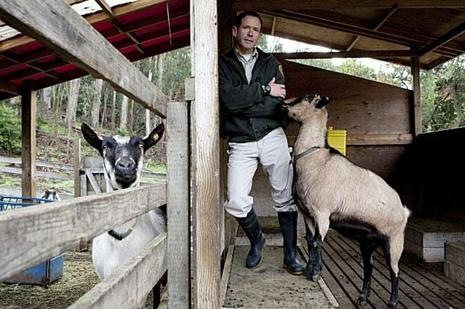 David Zuckermann, the supervising naturalist for Tilden Parks, is hoping for the return of Honey, a missing Swiss alpine goat who had lived at Tilden Little Farm for many years, in Berkeley, Calif., on Friday, Jan. 15, 2010.  Honey disappeared last week and Zuckermann believes she was stolen from her pen. Photo: Laura Morton, Special To The Chronicle