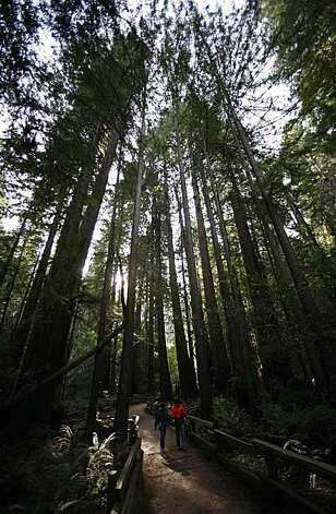 Visitors walk through Bohemian Grove at Muir Woods onDecember 14, 2007. Photo: Kim Komenich, The Chronicle