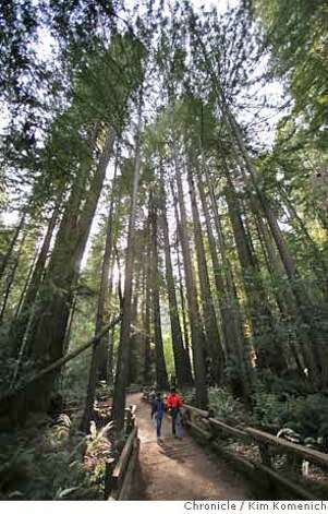 Visitors walk through Bohemian Grove at Muir Woods Friday.  January 2008 will mark the 100th anniversary of the dedication of Muir Woods. If not for Congressman William Kent, the area would be under 1,000 feet of water.  Photo by Kim Komenich/The Chronicle  ** Photo: Kim Komenich