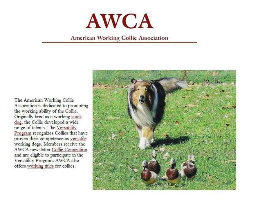 Screen grab from the American Working Collie Association website.