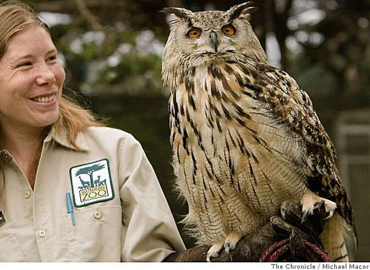 """Tracey Nappi, an education specialist at the San Francsico Zoo, holds three year old, """"Athena"""" on Thursday July 10, 2008, the Eurasian Eagle Owl has been raised at the zoo since it was hatched there in 2005. """"Athena"""" was one of three eggs that survived a smuggling attemp as eggs were intercepted at San Francisco International Airport and a suspect was arrested for the illegal activity, by United States Fish and Game agents.Photo By Michael Macor/ The Chronicle"""