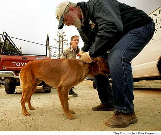 Monterey, Calif., County SPCA Humane Officer Danielle Scheid, center and Monterey County SPCA Executive Dirtector Gary Tiscornia, right, collar a stray dog along Highway 1 in the  Big Sur, Calif., fire area on Wednesday July 2, 2008 Photo by Kim Komenich / The Chronicle Photo: Kim Komenich, The Chronicle