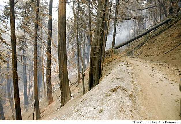 A private road near the Ventana Inn and Spa is made impassable by a fallen tree as the Basin Complex fire continues to burn in and around Big Sur, Calif., on Thursday, July 3, 2008 Photo by Kim Komenich / The Chronicle Photo: Kim Komenich, The Chronicle