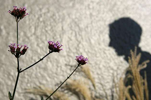 Verbena bonariensis grows in a garden landscaped by Jane Martin, architect, designer, and founding director of Plant SF, a non-profit organization that promotes landscaping on the sidewalks of San Francisco, at the corner of Harrison Street and 23rd Street Tuesday, December 2, 2009. Photo: Erin Lubin, Special To The Chronicle