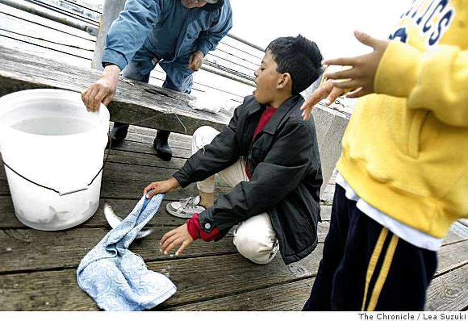 Peter Le, 9, (center) of Oakland tries to pick up a fish caught by his grandparents near the Port of Richmond in Richmond, Calif. on Monday June 23, 2008. Photo By Lea Suzuki/ The Chronicle Photo: Lea Suzuki, The Chronicle