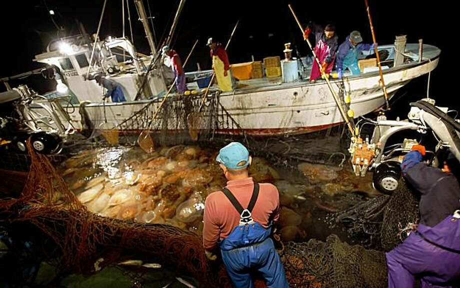 **ADVANCE FOR SUNDAY, NOV. 15** This Oct. 14, 2009 photo shows fishermen pulling a net full of jellyfish out of the ocean off the coast of Kokonogi, Japan. Once considered a rarity occurring every 40 years, jellyfish swarms are now an almost annual occurrence along several thousand kilometers (miles) of Japanese coast, and far beyond Japan, decimating local fishing industries from the Japan Sea to the Black Sea. (AP Photo/Junji Kurokawa) Photo: Junji Kurokawa, AP