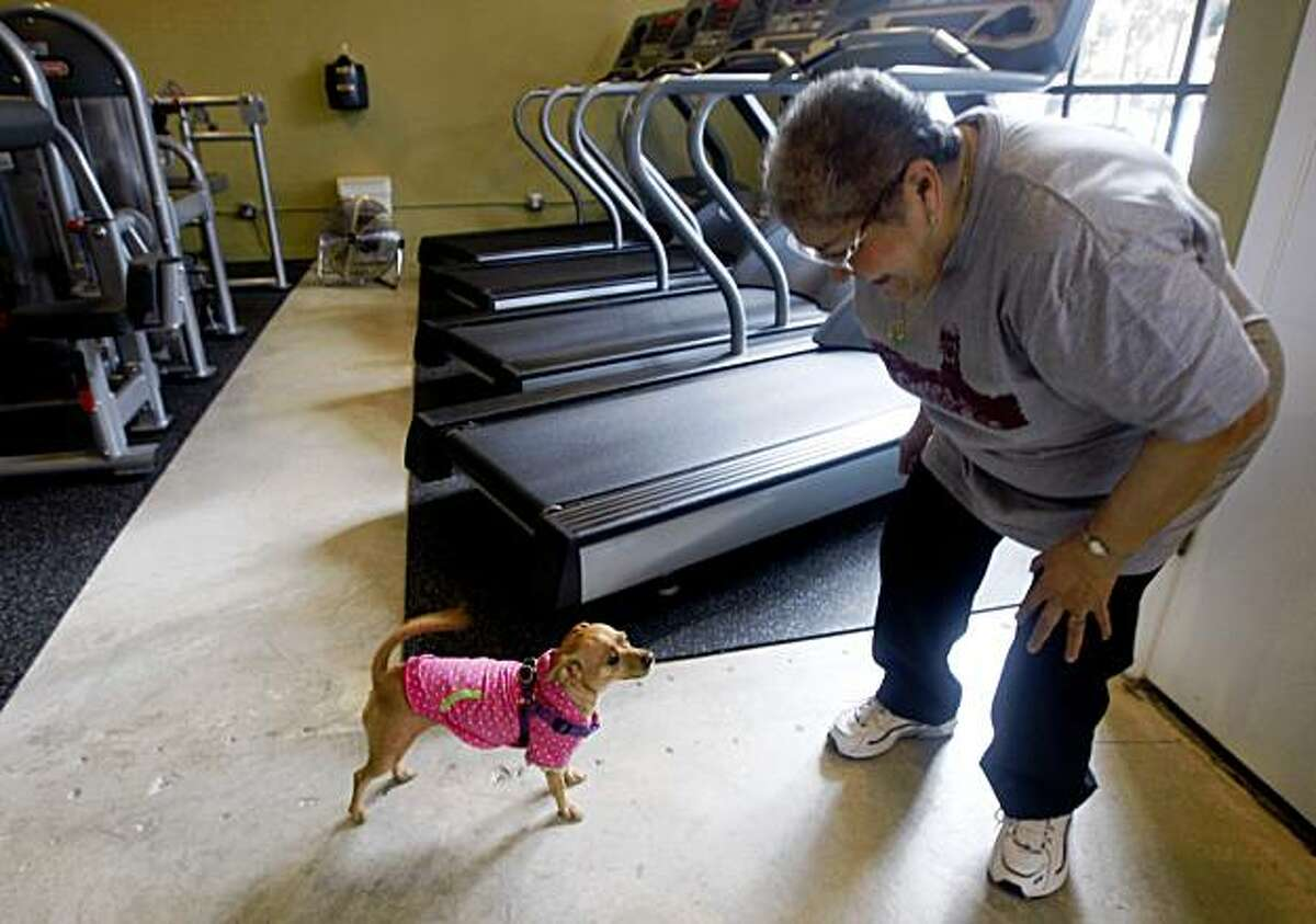 Angela Ferrufino briefly interrupts her treadmill workout to tend to her chihuahua Cinnamon who came out to look for Ferrufino at the Fit Bernal Fit gym on Cortland Street in San Francisco, Calif., on Saturday, Nov. 6, 2009.