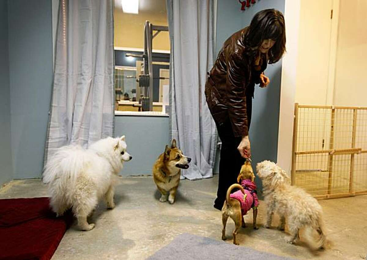 Jeanne Eriksen keeps four-legged clients happy in the canine playroom while their owners exercise at the Fit Bernal Fit gym on Cortland Street in San Francisco, Calif., on Saturday, Nov. 6, 2009. Eriksen and her husband recently opened the fitness club which features a dog-sitting service.