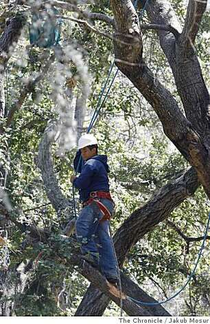 UC Berkeley began cutting ropes and removing gear from a grove outside of Memorial Stadium in Berkeley, Calif. on Tuesday, June 17, 2008.  Photo by Jakub Mosur  /  Special to the Chronicle. Photo: Jakub Mosur, The Chronicle