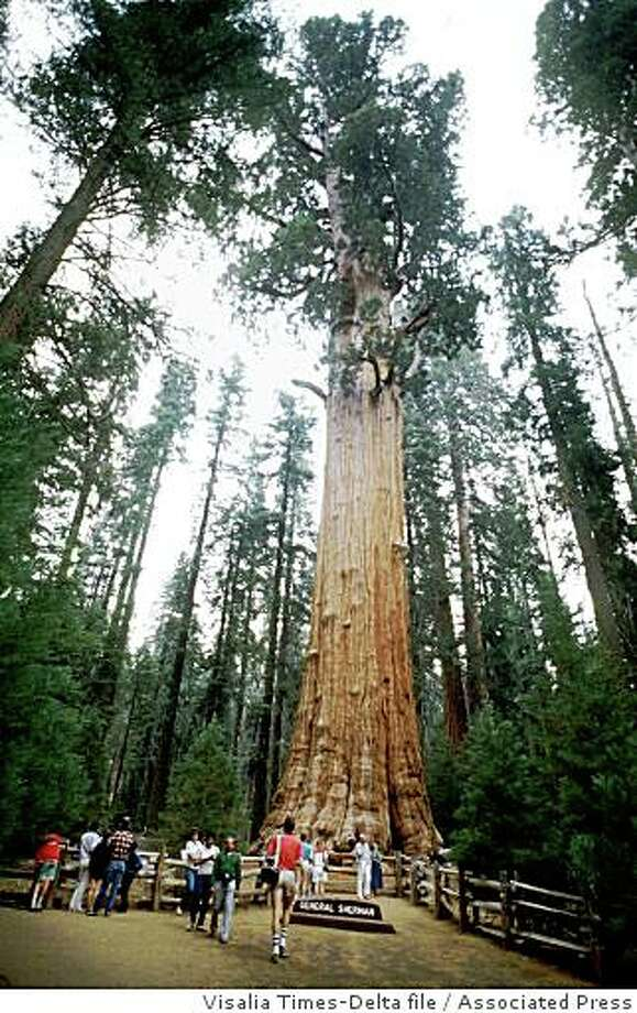 Sequoia and Kings Canyon National ParkSequoia is spectacular whether traversed by foot, car or horseback. Massive trees look tiny compared to the park's craggy peaks and granite domes. If you can take your eyes of the green giants and the towering rocks and look down, you'll find rushing rivers and easily accessible marble caverns.  Photo: Visalia Times-Delta File, Associated Press