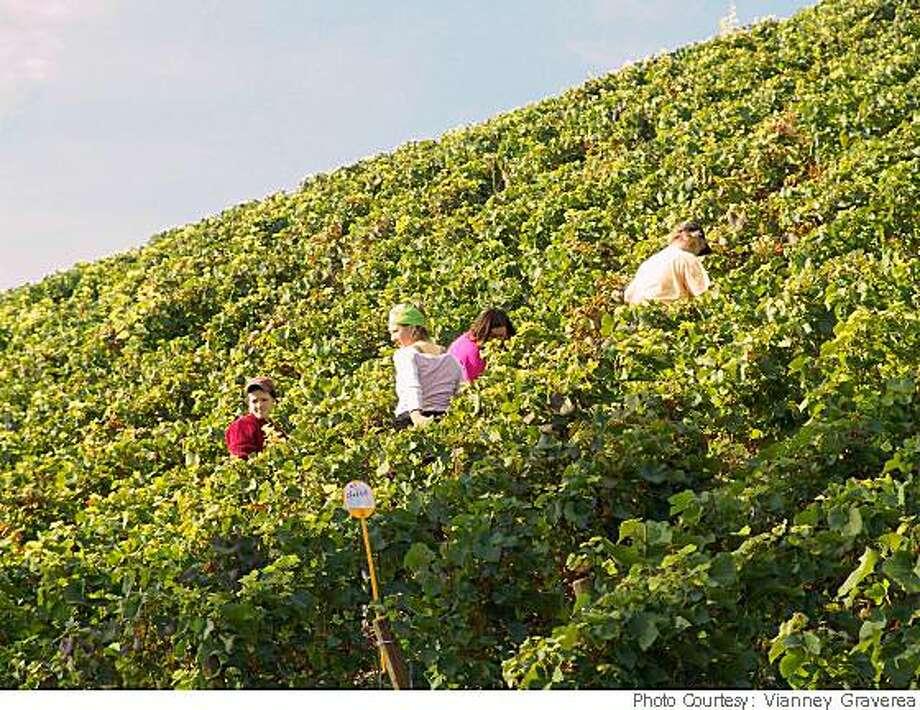 Clos des Goisses vineyards in France.Photo Courtesy: Vianney Gravereaux Photo: Photo Courtesy: Vianney Graverea