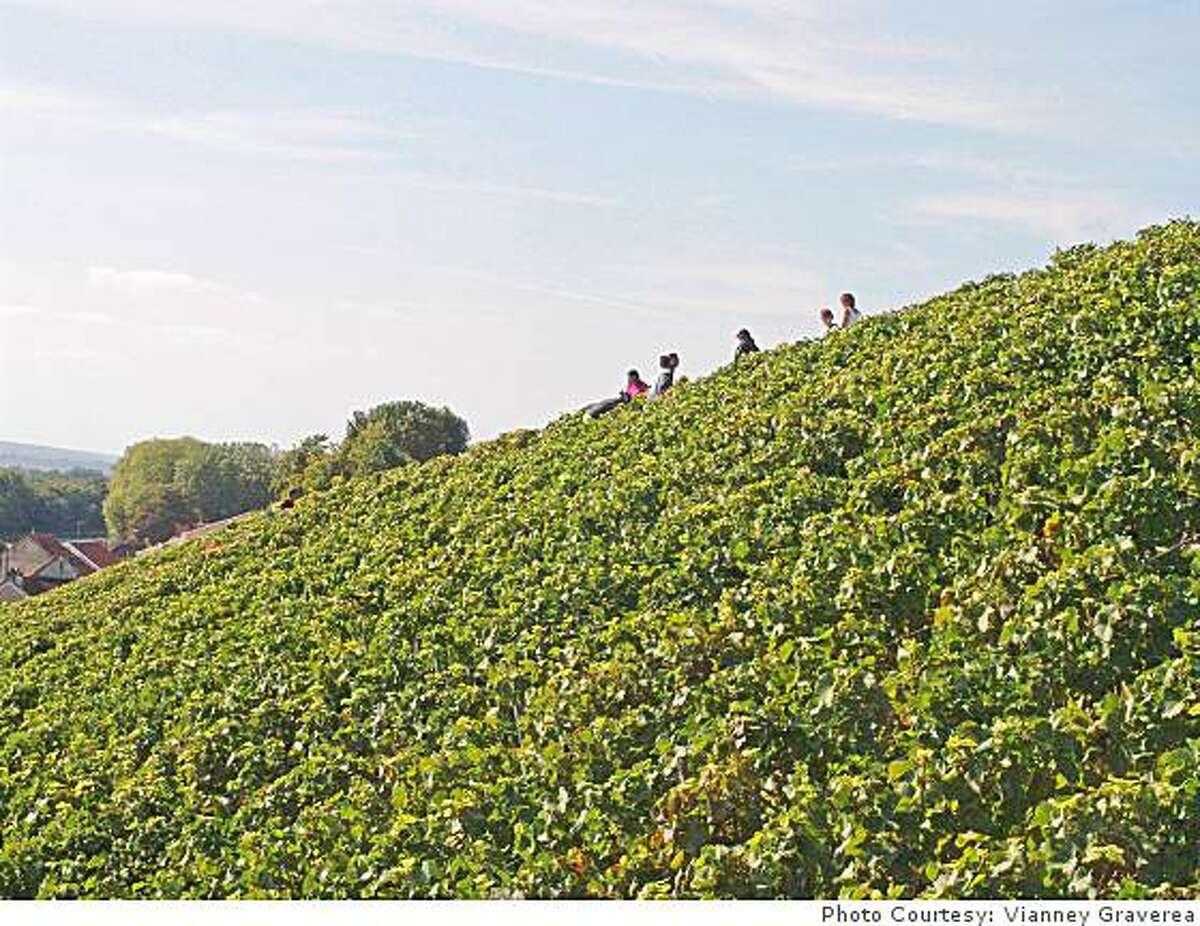 Clos des Goisses vineyards in France.Photo Courtesy: Vianney Gravereaux