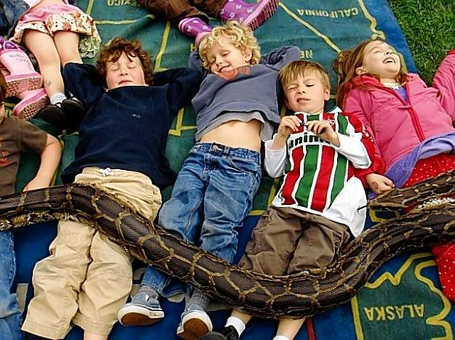 "Children enjoying a ""snake massage"" from Julie the Burmese Python Photo: Tree Frog Treks"