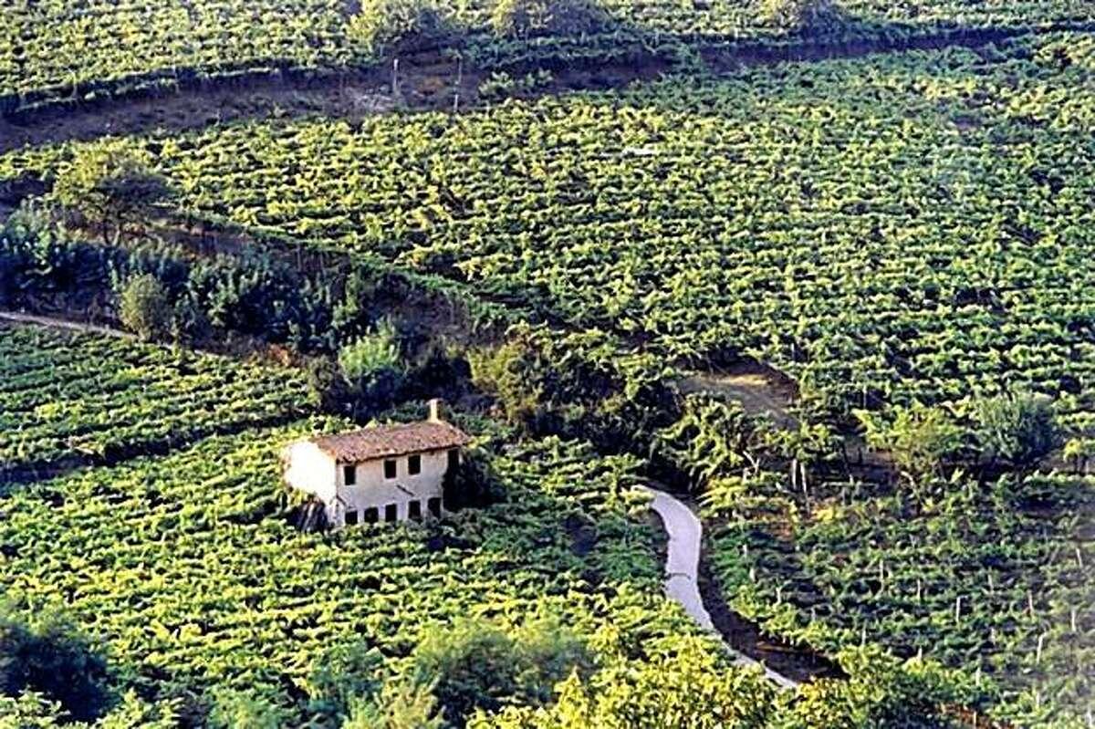 Vineyards in the Soave region.