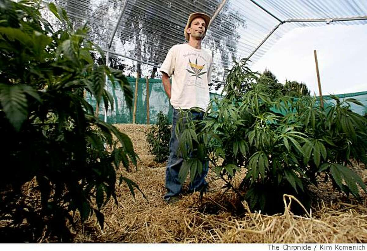 Marijuana grower Ukiah Morrison, candidate for Mendocino County Supervisor, shows the plants he's growing behind his Ukiah, Calif., home on Tuesday, May 13, 2008. Mendocino County residents are preparing to decide on controversial Measure B, a proposal to outlaw the growing of more than six medicinal marijuana plants. Photo by Kim Komenich / San Francisco Chronicle