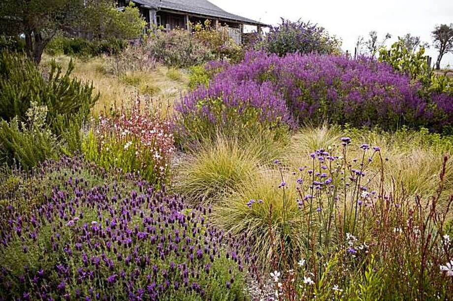 """The American Meadow Garden"" by John Greenlee and Saxon Holt.   Copyright 2009 by Saxon Holt, courtesy of Timber Press. Photo: Saxon Holt"