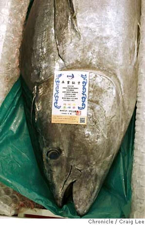 ###Live Caption:A Kindai farmed-raised bluefin tuna imported from Japan at IMP Seafood Importers in Hayward, Calif., on May 1, 2008. This is a new, very expensive fish that's being used by high-end sushi bars and restaurants because of it's very low mercury content.  Photo by Craig Lee / The San Francisco Chronicle###Caption History:A Kindai farmed-raised bluefin tuna imported from Japan at IMP Seafood Importers in Hayward, Calif., on May 1, 2008. This is a new, very expensive fish that's being used by high-end sushi bars and restaurants because of it's very low mercury content.  Photo by Craig Lee / The San Francisco Chronicle###Notes:Craig Lee 415-218-8597 clee@sfchronicle.com###Special Instructions:MANDATORY CREDIT FOR PHOTOG AND SF CHRONICLE/NO SALES-MAGS OUT Photo: Photo By Craig Lee