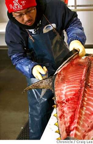 ###Live Caption:A Kindai farmed-raised bluefin tuna imported from Japan at IMP Seafood Importers in Hayward, Calif., on May 1, 2008. James Shimizu is carving the bluefin tuna into pieces for different restaurants. This is a new, very expensive fish that's being used by high-end sushi bars and restaurants because of it's very low mercury content.  Photo by Craig Lee / The San Francisco Chronicle###Caption History:A Kindai farmed-raised bluefin tuna imported from Japan at IMP Seafood Importers in Hayward, Calif., on May 1, 2008. James Shimizu is carving the bluefin tuna into pieces for different restaurants. This is a new, very expensive fish that's being used by high-end sushi bars and restaurants because of it's very low mercury content.  Photo by Craig Lee / The San Francisco Chronicle###Notes:Craig Lee 415-218-8597 clee@sfchronicle.com###Special Instructions:MANDATORY CREDIT FOR PHOTOG AND SF CHRONICLE/NO SALES-MAGS OUT Photo: Photo By Craig Lee