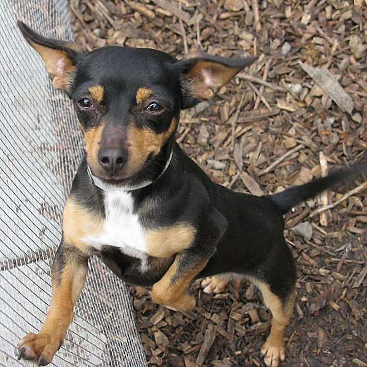 The Oakland SPCA is holidng a Small Dog Adoptathon Fair on Oct. 18.