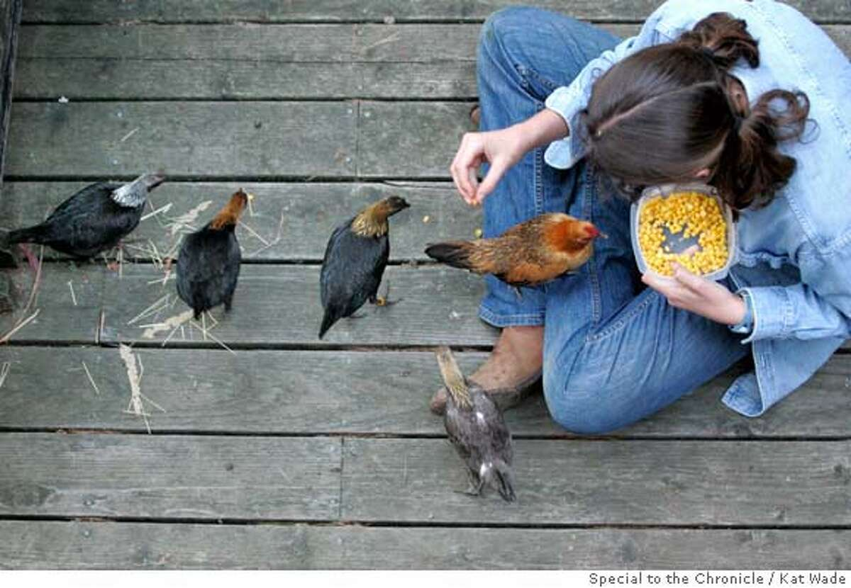 """From left, """"Luna"""", """"Poppy"""", """"Roxanne"""", """"Moonshine"""" and """"Ginger Pye II"""" line up to be hand fed corn by Montclair 4H member, Chloe Hawkey, 13, on the deck of her home in the hills of Oakland, Calif. on Tuesday, March 25, 2008. Photo by Kat Wade / Special to the Chronicle"""