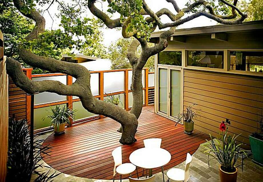 The oak tree is surrounded by circular deck of sustainable Ipe wood. Photo: J. Michael Tucker