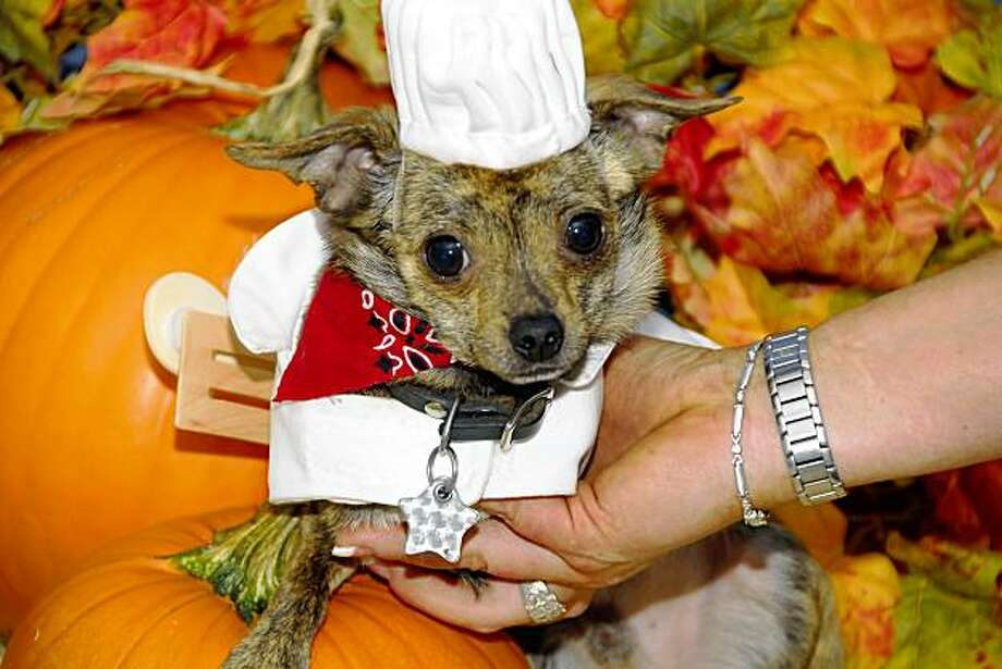 This pup dressed as Ratatouille was a first place winner at a Howl-O-Ween Pet Party at the Sonoma Humane Society. Photo: Sonoma Humane Society